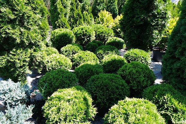 Подбор растений